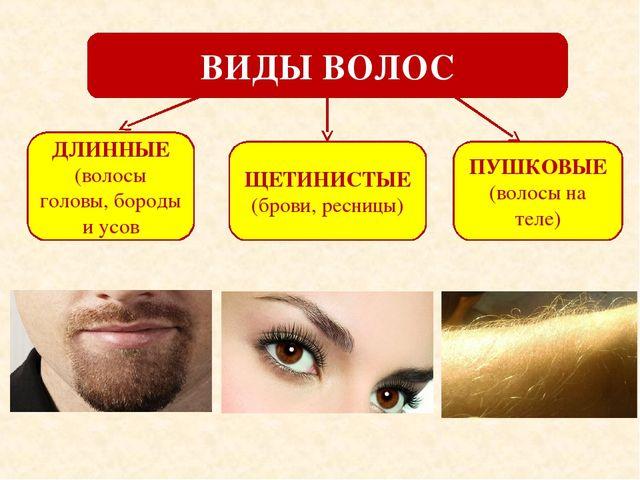 Виды и форма волос